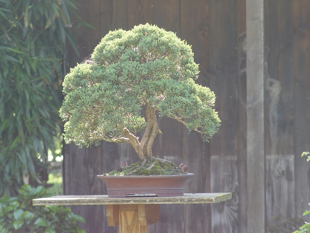 bonsai-002_1_orig1